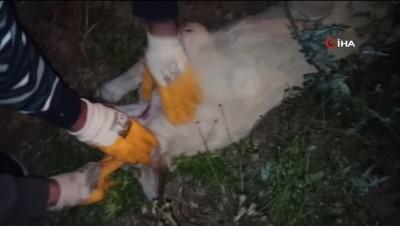pompali tufek -  - Köpeği acımasızca öldürmüşler