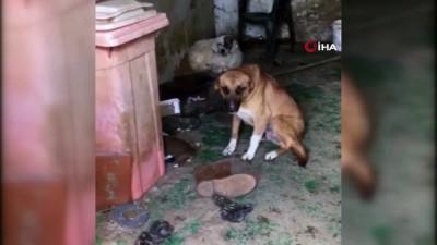 Kötü şartlarda bakılan sokak hayvanları operasyonla kurtarıldı