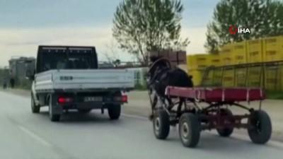 Sürücüsüz at arabası trafiği bir birine kattı