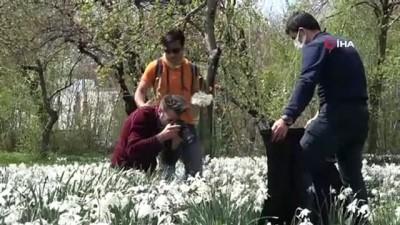Zerrinkadeh çiçekleri doğal fotoğraf stüdyosu oldu