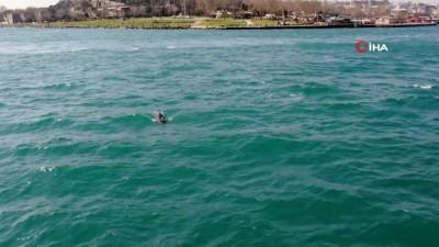 deniz trafigi -  İstanbul'da yunus balığı sürüsü görsel şölen oluşturdu