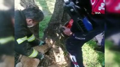 kopek -  Kafası ağaç kavuğuna sıkışan köpeği itfaiye kurtardı