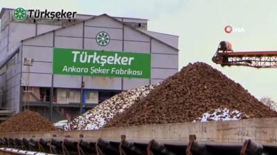 market -  Türkşeker Ankara'da ilk serasını kurdu: İlk ürünler raflarda yerini aldı