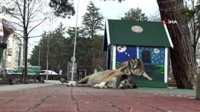 sokaga cikma yasagi -  Dünya Sokak Hayvanları Günü'nde meydanlar sokak hayvanlarına kaldı