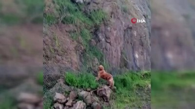 Tel örgülerin arkasında sıkışan kargayı gören köpek haber verdi, itfaiye kurtardı