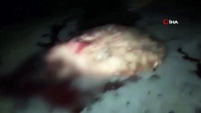 Mardin'de iki araç koyun sürüsüne daldı: 24 hayvan telef oldu