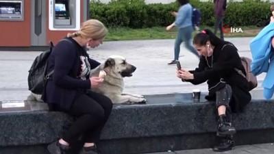 kopek -  Taksim'de köpeğin turistlerle dondurma keyfi