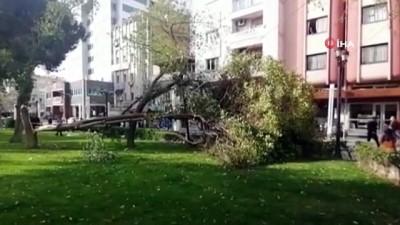 Turgutlu'da fırtına ağaçları devirdi