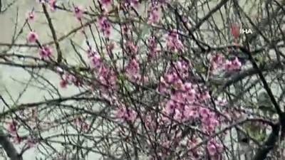 yagan -  İlkbaharda yağan kar görsel şölen oluşturdu