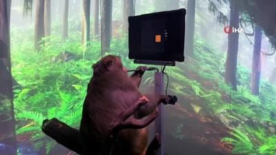 akilli telefon -  - Neuralink'in beyin çipi maymun üzerinde denendi