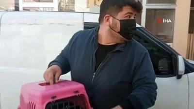 Yaralı kedi ve köpek tedavi için İstanbul'a gönderildi