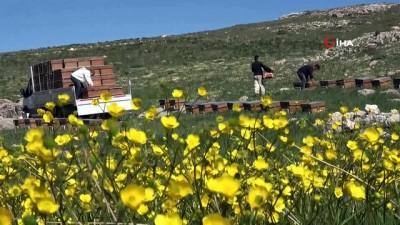propolis -  Arıların tatlı yolculuğu başladı, en büyük endişe ise kuraklık