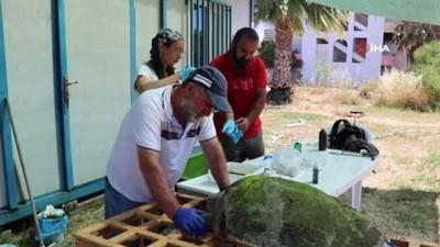 Tedavisi tamamlanan Caretta Caretta denize bırakıldı