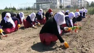 ogretim uyesi -  - Ata tohumları ve sebze fidanları toprakla buluştu
