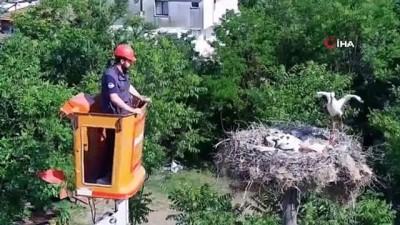 Ayaklarına ip dolanan yavru leylekleri belediye ekipleri kurtardı