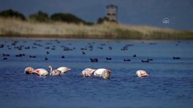 bag kur - İZMİR - Gediz Deltası'nda baharla hareketlenen kuşların dünyası kayıt altına alınıyor