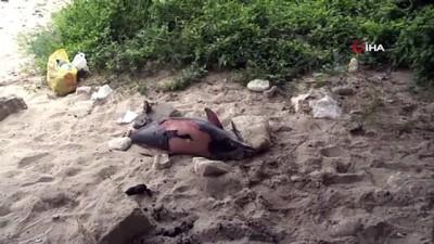evlilik teklifi -  Arnavutköy'de ölü yunus balığı kıyıya vurdu