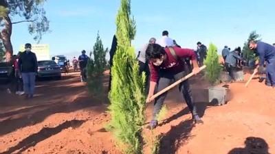 hassasiyet - ANTALYA - Türkiye'de bu yıl 600 milyon fidanın toprakla buluşturulması hedefleniyor
