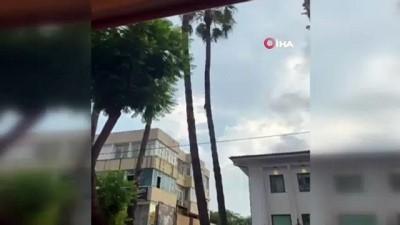 palmiye agaci -  20 metre uzunluğunda palmiye ağacına çıkan kedinin, vatandaşların açtığı brandaya düştüğü anlar kameralara yansıdı