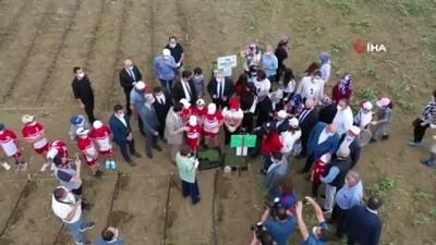 kabil -  Engelli bireylerin mutlu günü...Sebze eken engelli bireyler ürünlerini yine kendileri hasat ederek satacak