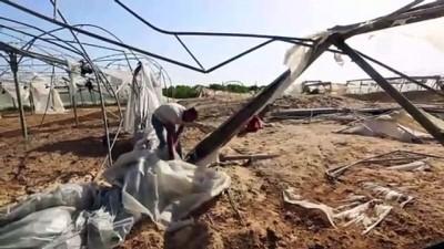 kirikli - GAZZE - Gazzeli çiftçiler İsrail saldırılarının ardından buruk bir hasat dönemi geçiriyor (1)