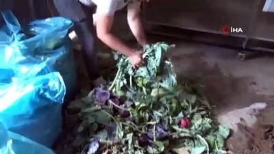 yerli tohum -  Sebze ve meyve atıklarından üretilen gübre yerli tohumlarda kullanılıyor