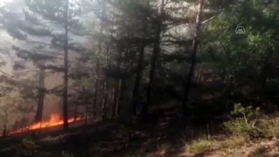 agacli - KARS - Sarıkamış'ta örtü yangını