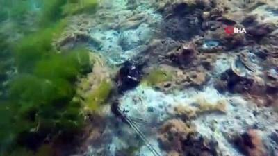 Çürüyen deniz salyası bu haliyle dehşete düşürdü