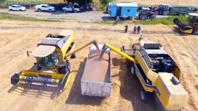yerli tohum - MUĞLA - TİGEM'de yerli tohum buğdayın hasadından yüksek verim elde edildi