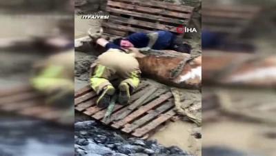 itfaiye eri -  İstanbul İtfaiyesi'nden inek kurtarma operasyonu