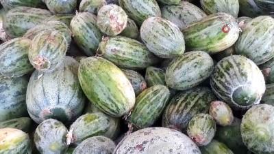 yerli tohum -  Şanlıurfa'da yetiştirilen 'Şelengo meyvesi' tescillendi