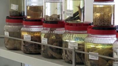 BALIKESİR - Bilim insanları müsilaj oluşumunun Marmara Denizi'ne etkilerini araştırıyor