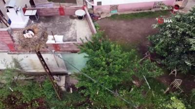 gozleme -  Köy halkı her yıl bu leyleklerin yolunu gözlüyor