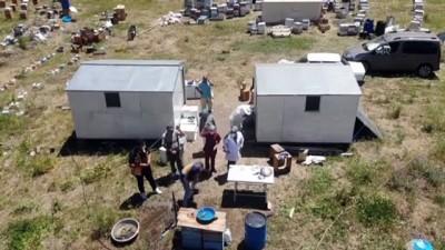 AĞRI - Yaylalarda 'ballı' mesaide olan arıcılara da aşı hizmeti sunuluyor