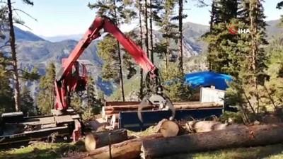 koy yollari -  Ekmek parası için tomruk yüklü kamyonları tehlikeli dağ yollarında kullanıyorlar