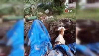Kuyuya düşen ineği fark eden kangal köpeği saatlerce başından ayrılmadı