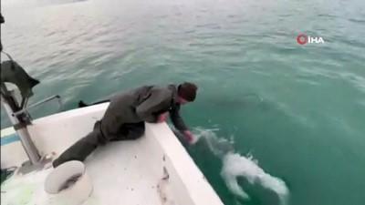 Trabzonlu balıkçılarla yunusların dostluğu kamerada