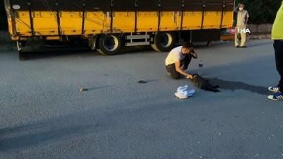 gozyasi -  Aracın çarpması sonucu yaralanan köpeğinin başında gözyaşı döktü