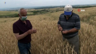 - Edirne'de çiftçiler buğday harmanı sezonundan umutlu