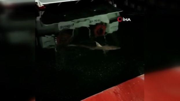 olta -  Haliç'te köpek balığı görüntülendi