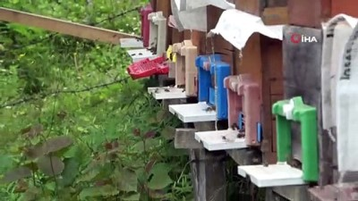 Kafkas ana arıları ilçedeki bal üretimini 3'e katladı