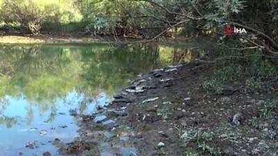 yumurta -  Manavgat'ta çamura dönen göletlerde balık ölümleri Videosu