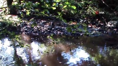 gubre -  Manyas'ta derelerde kirliliğin önü alınamıyor