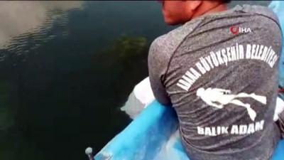 eziler -  Nehirde bulunan çuvaldan telef olmuş 3 kedi çıktı