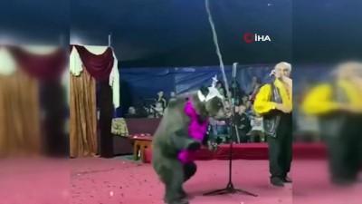 memur -  - Rusya'da sirkte gösteri yapan ayı terbiyecisine saldırdı