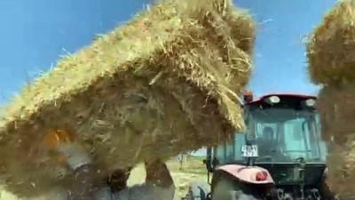 gubre - EDİRNE - Trakya çiftçisi bayramda da üretime devam ediyor