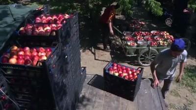 strateji - BURSA - Türkiye'nin yaş meyve sebze ihracatında artış eğilimi sürüyor