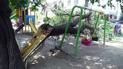 cocuk parki -  Çocuk parkında ağaç devrildi, şans eseri can kaybı ya da yaralanan olmadı