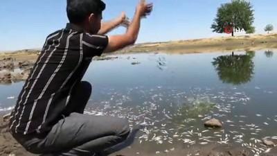 Asırlardır balıkların yaşadığı Şilan Çayı'nda korkutan görüntüler