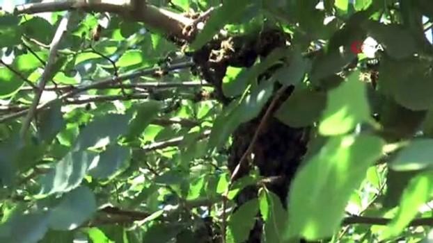 propolis -  Şifa kaynağı 'arı sütü'nün kilosunu 10 bin liraya satıyor